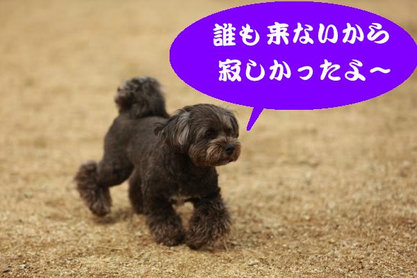 IMG_1620_convert_20150217203240.jpg