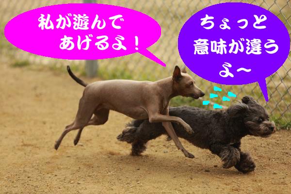 IMG_1630_convert_20150217203339.jpg