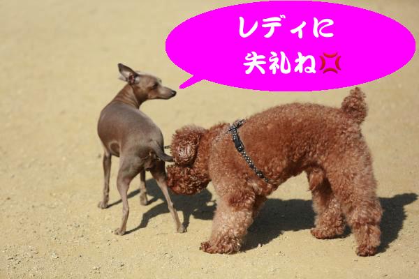 IMG_2591_convert_20150221181805.jpg