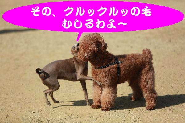 IMG_2594_convert_20150221181911.jpg