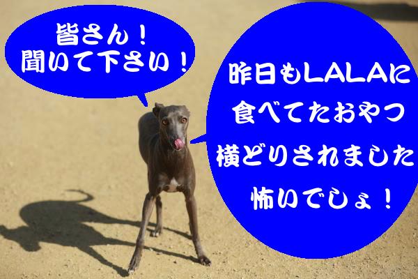 IMG_2621_convert_20150221184106.jpg
