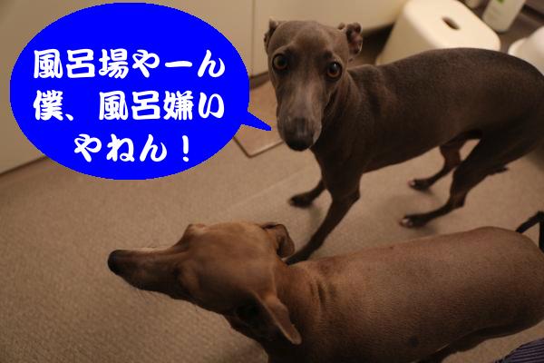 IMG_3315_convert_20150226190426.jpg