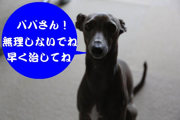 IMG_5050_convert_20150110171251.jpg