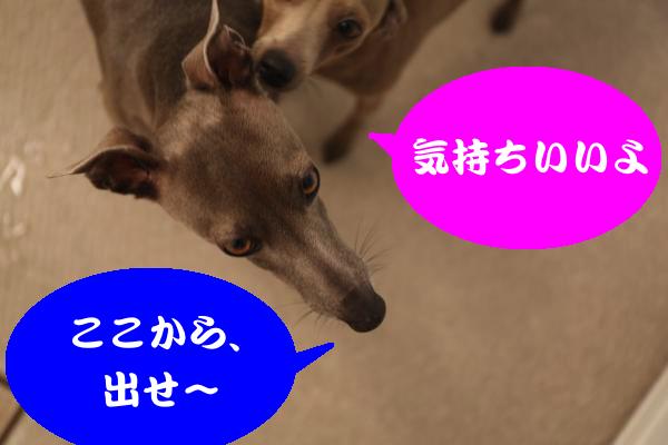 IMG_7142_convert_20150126201340.jpg