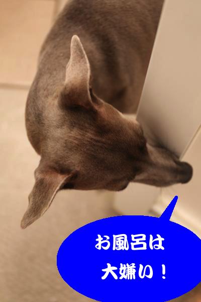 IMG_7145_convert_20150126201805.jpg