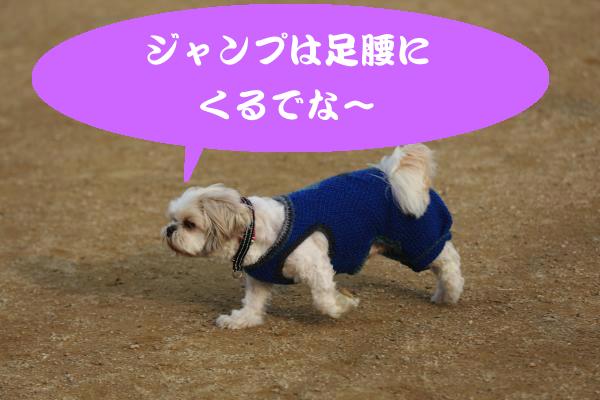 IMG_9603_convert_20150209003946.jpg