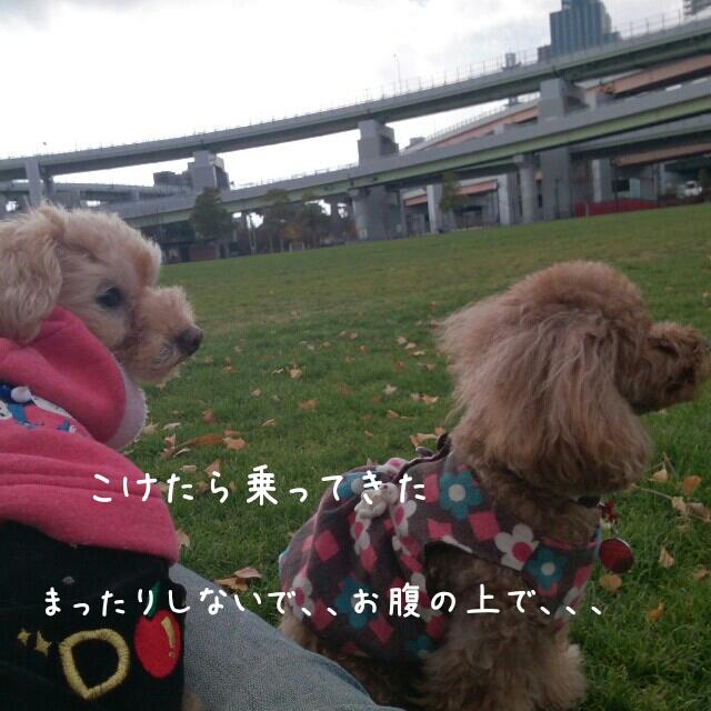 2014122520464684b.jpg