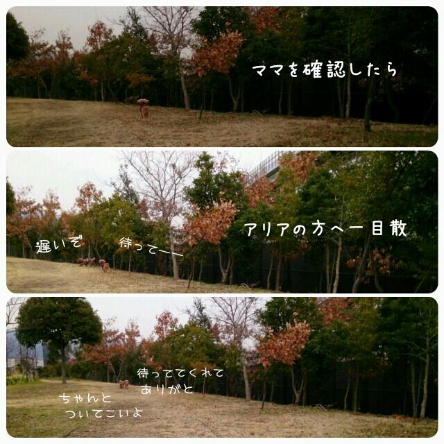 201501301307391ac.jpg