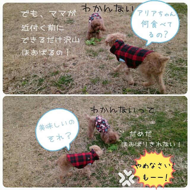 20150131001114dd8.jpg