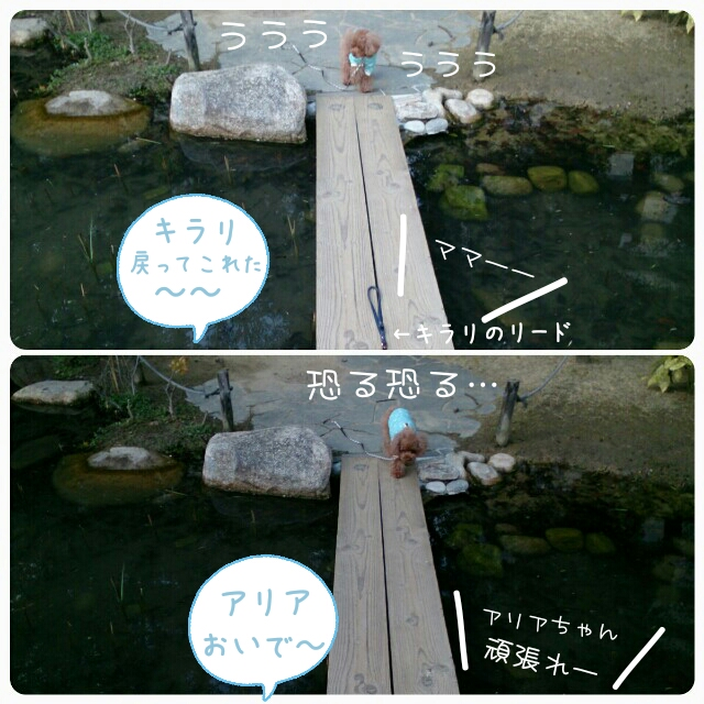 20150212130104c8d.jpg