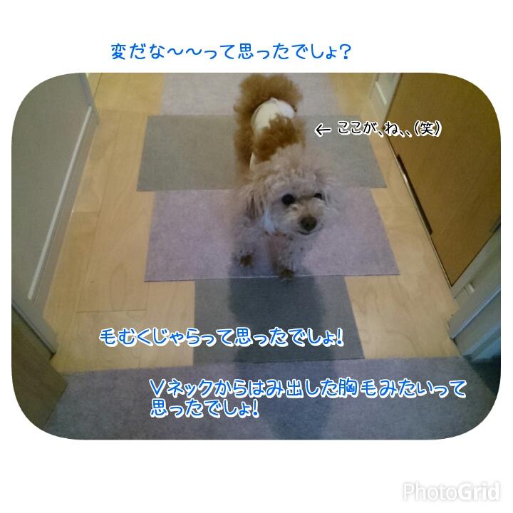 201504291317018ca.jpg
