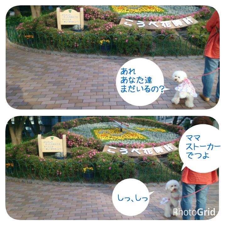201505141619409a2.jpg