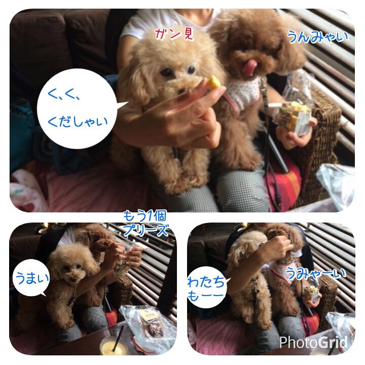 20150524140310ab9.jpg