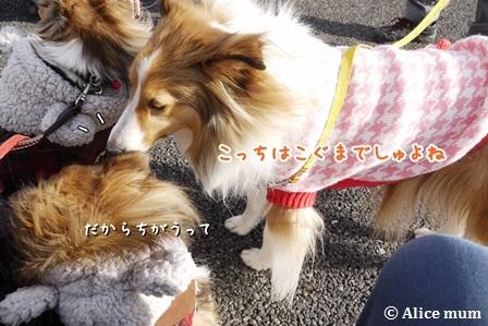 16m_2015011901143231f.jpg