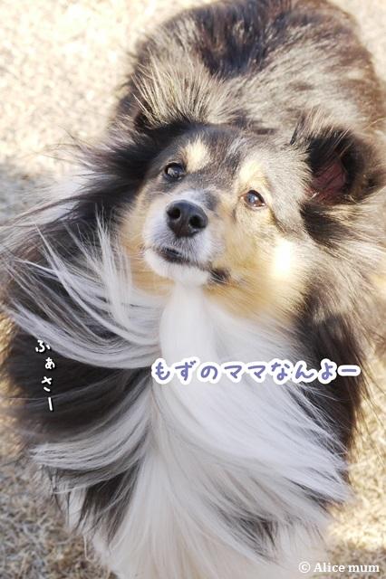 24m_20150122013441f2a.jpg