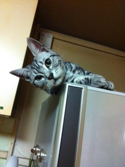 冷蔵庫 ネオ