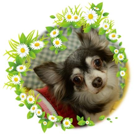 保護 犬 カフェ 千葉