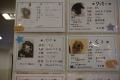 20150213_dogs_保護犬カフェ_DSC_ (26)s