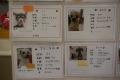 20150213_dogs_保護犬カフェ_DSC_ (28)s