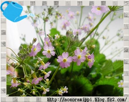 sakurasou0211a.jpg