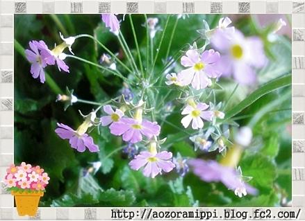 sakurasou0211b.jpg