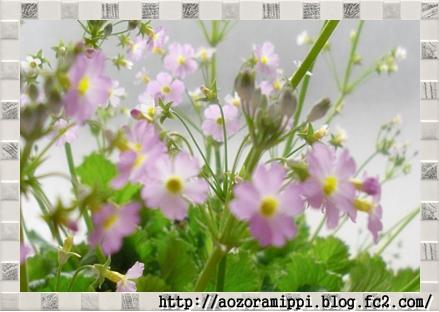 sakurasou0211c.jpg