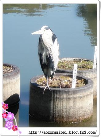 太宰府にいた鳥
