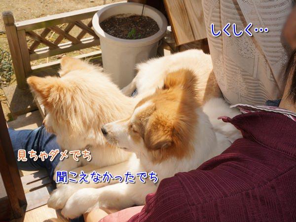 20150315_5_1.jpg