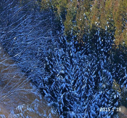 s-20150118雪