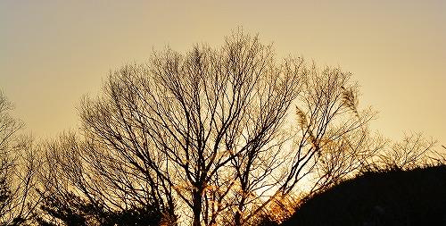 s-夕陽20150118