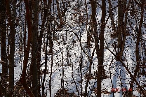 残雪の田人路20150314