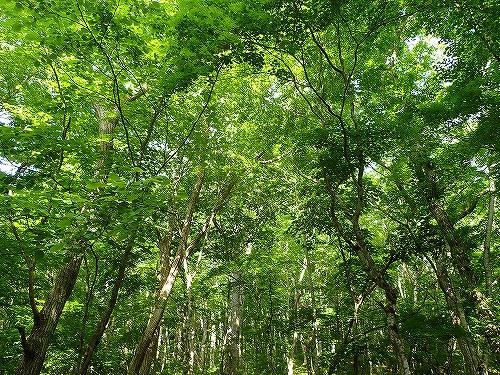 s-田人路の広葉樹林②20150601