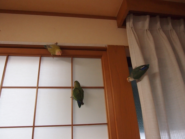 chiisaigazou098.jpg