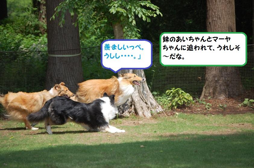 koyaru11.jpg