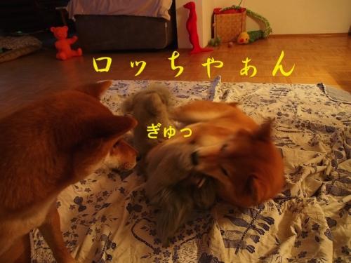 ぎゅcopy