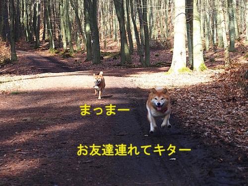 友達 copy