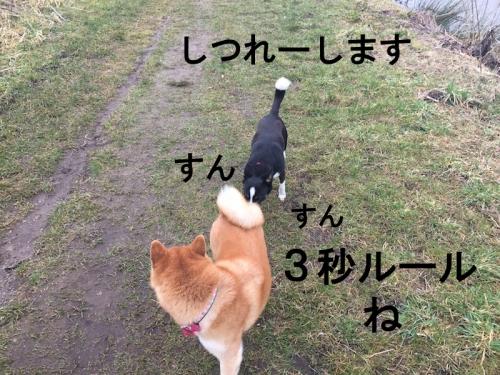 しつれー copy