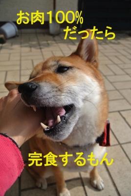 肉copy