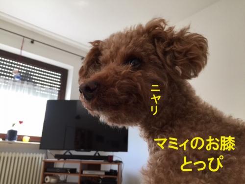 とっぴ copy