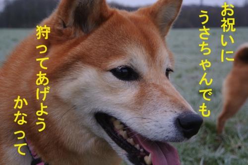 うさちゃんcopy