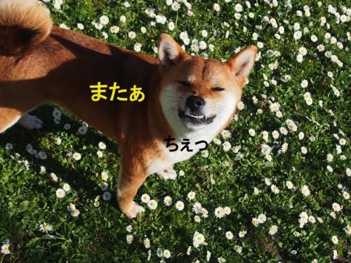 ちぇcopy