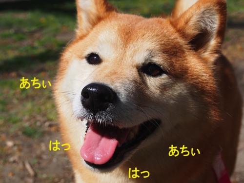 あちぃ copy
