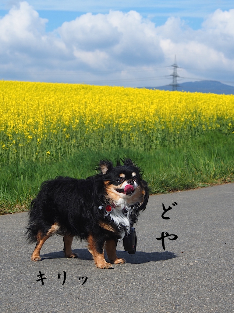 20150430070351077.png