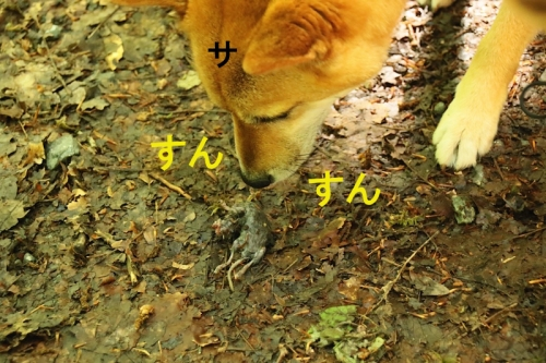 サンちゃんとネズミ2