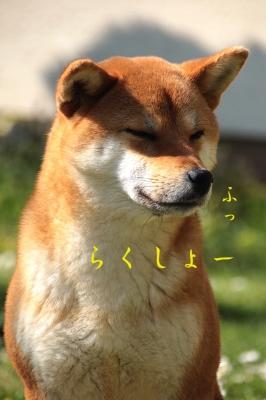 らくしょー copy