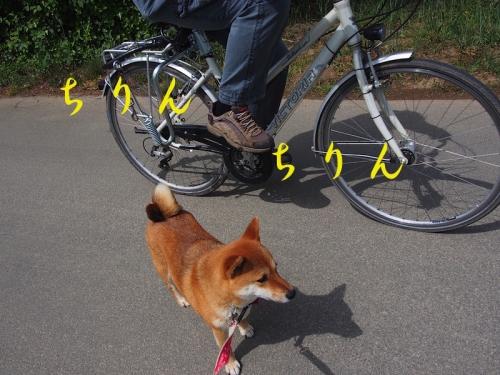 自転車 copy