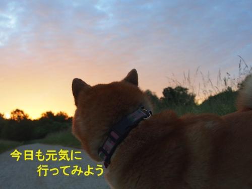朝5時 copy