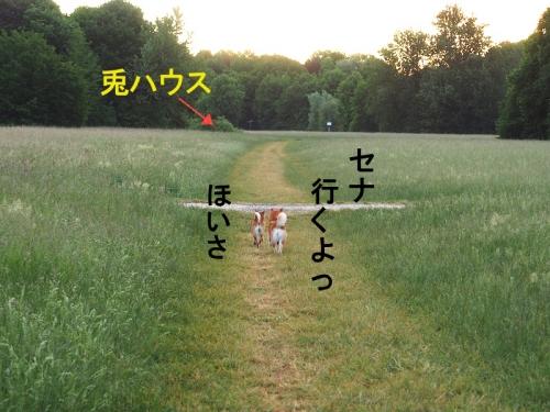 同伴犬copy