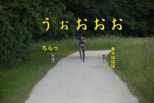 うぉおお copy