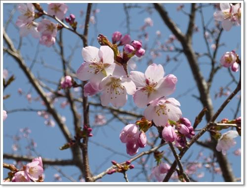 春の花2015年5月1